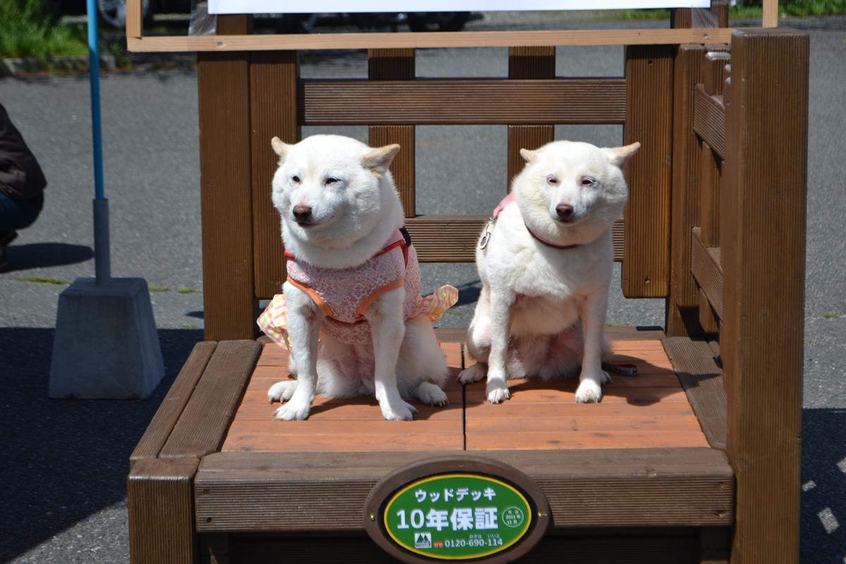 北九州市 シェリーちゃん・すずちゃん