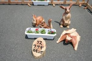 リス・ウサギ・モモンガ
